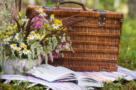 picnic stock photo pixabay