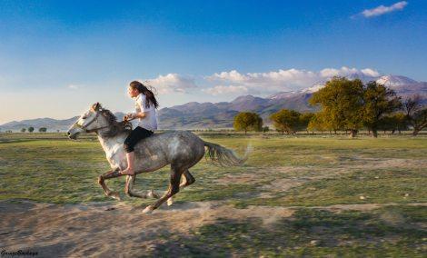 horseback riding hobbies stock photo unsplash