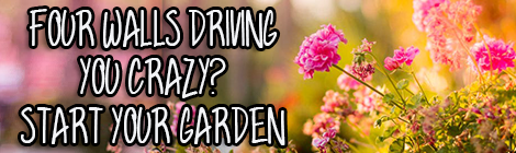 Four Walls Driving You Crazy? Start Your Garden contributed guest post floral garden drunk on pop guest post banner