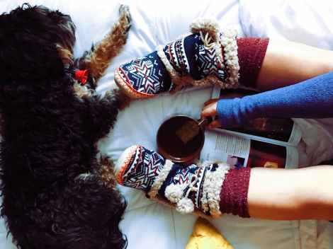 winter cozy home puppy time at home stock photo pexels-photo-218763